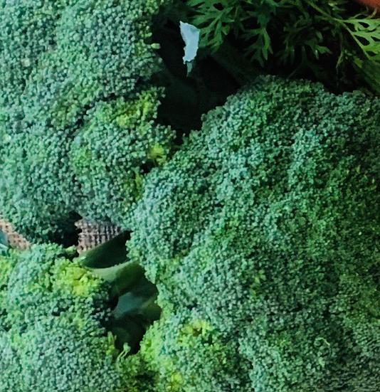 Broccoli KG