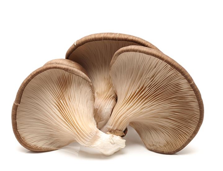 Mushroom Oyster 150g