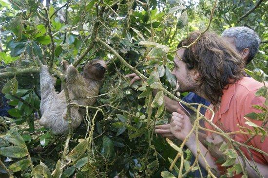 finca verde sloth