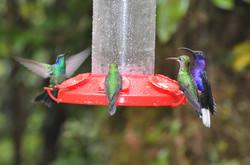 Bird_hummingbirds_group1_copy