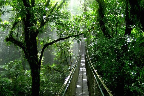 hangging bridge