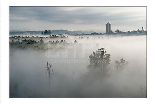 Neblina no Banhado