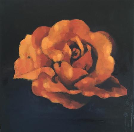 Rose in the Dark