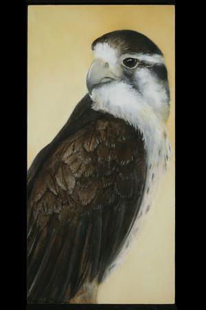 Saved, II: Peregrine Falcon