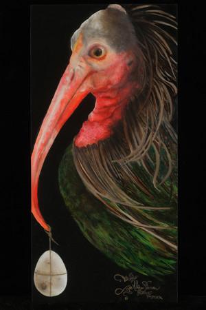 Northern Bald Ibis (Geronticus eremita)