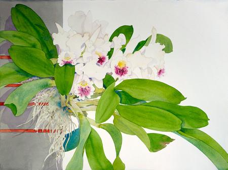 Naples Orchid