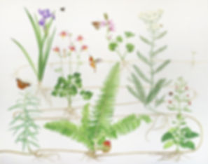 Rie Home / Rhizome by Jane Kim, Botanical explorations from the artist's Rise Home series 2019