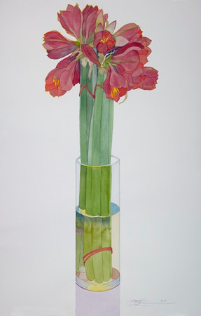 Amaryllis in a Tall Vase