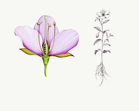 Flora Generica