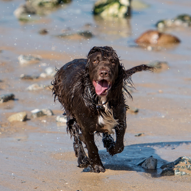 dog on beach.jpg