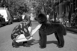 sasha the poodle May