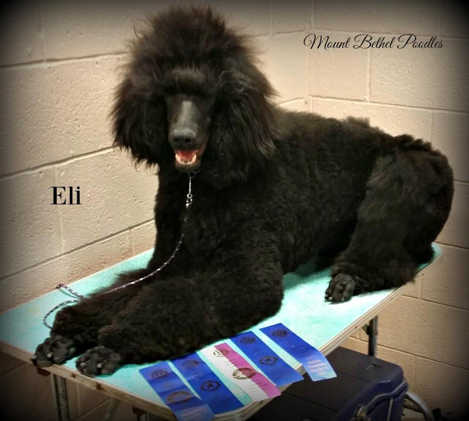 Eli Puppy Pic 6