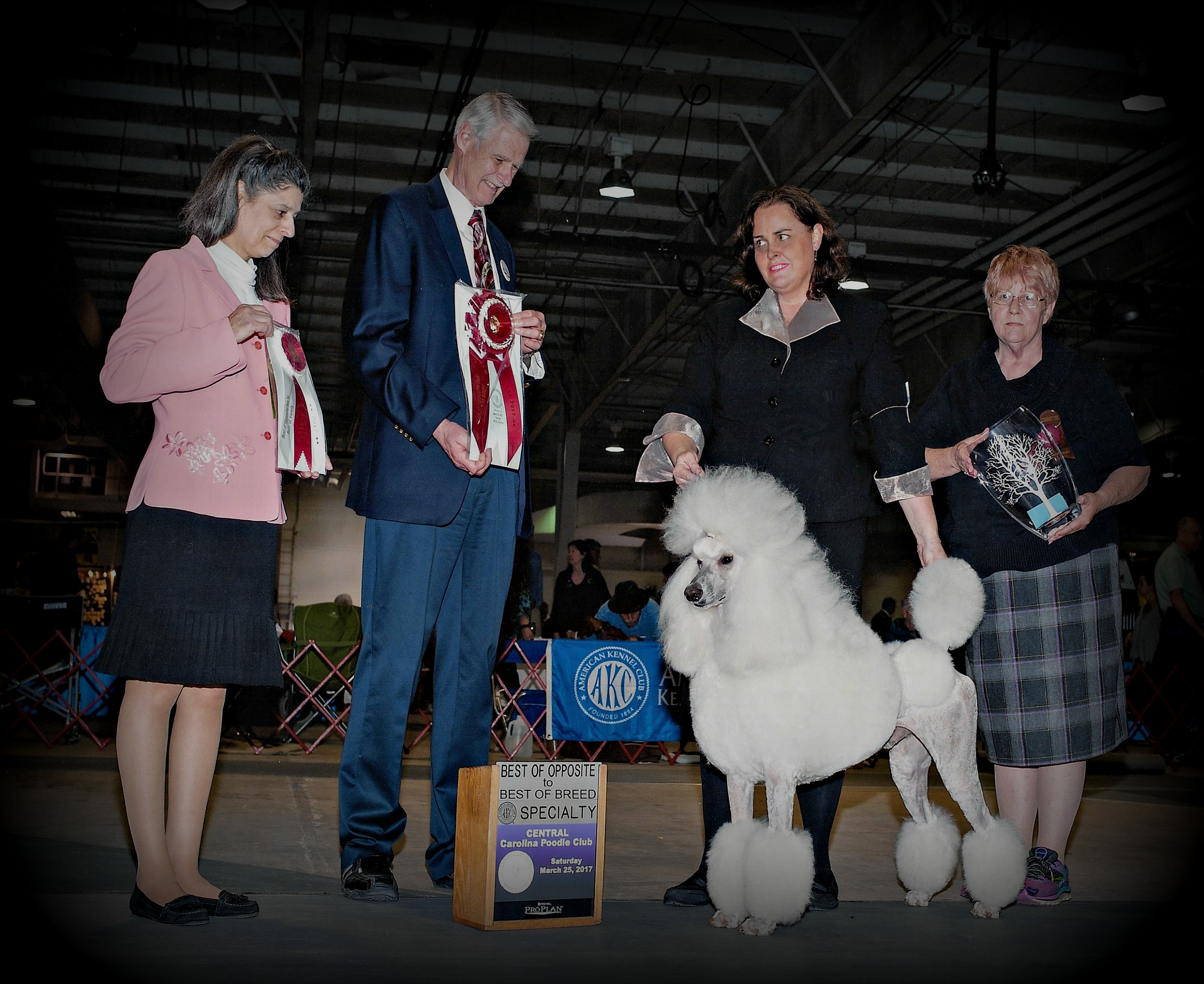 Central Carolina Poodle Club 2014 Bear w