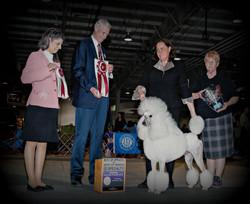 Central Carolina Poodle Club 2014 Bear w