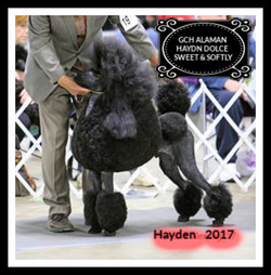 Hayden