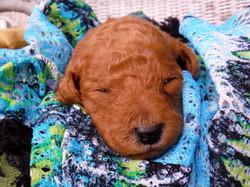 Gia puppy