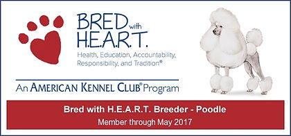 Mount Bethel Poodles American Kenne Club Bred with Heart