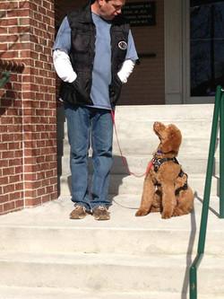 Gia pup service dog training