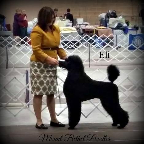 Eli Puppy Pic 4