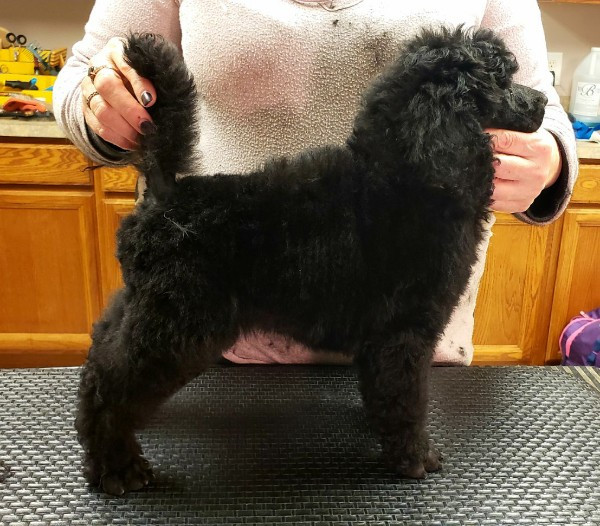 Knox puppy stack.jpg