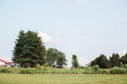 Spacious Fields