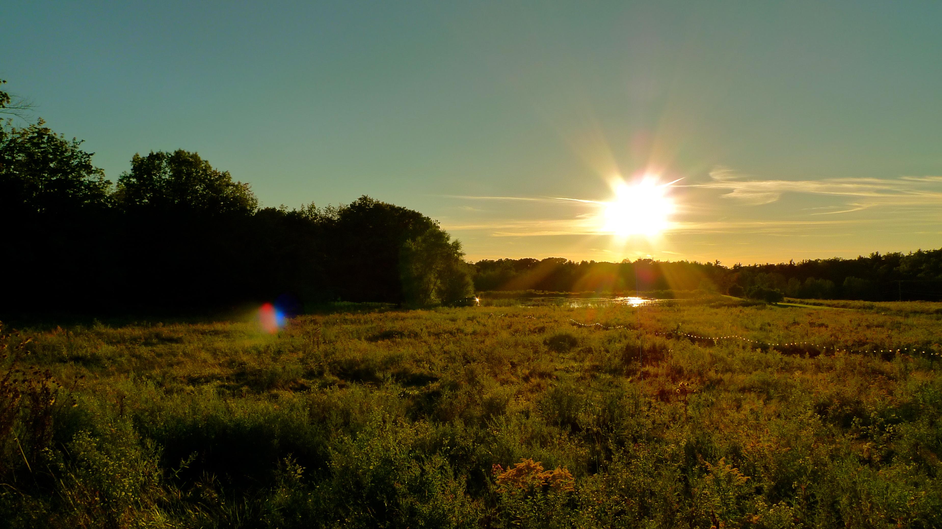 Field & Pond