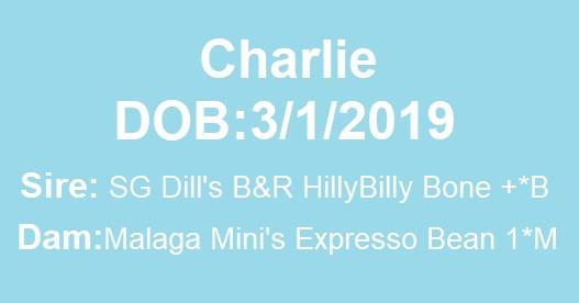 Charlie Lineage.jpg