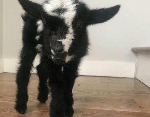 Riddick baby photo