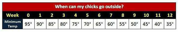 when chicks can go outside.JPG