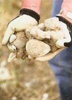 rocks-13-800-600-80.jpg