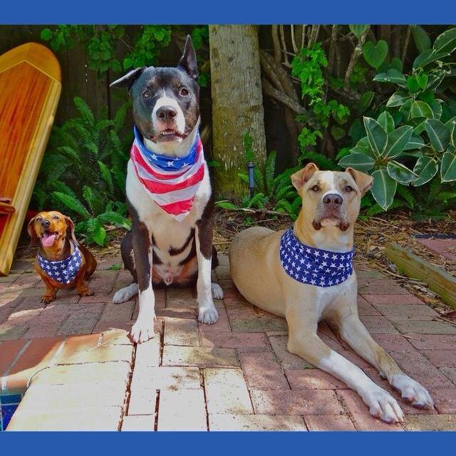 The Fedigan crew on the 4th of July!