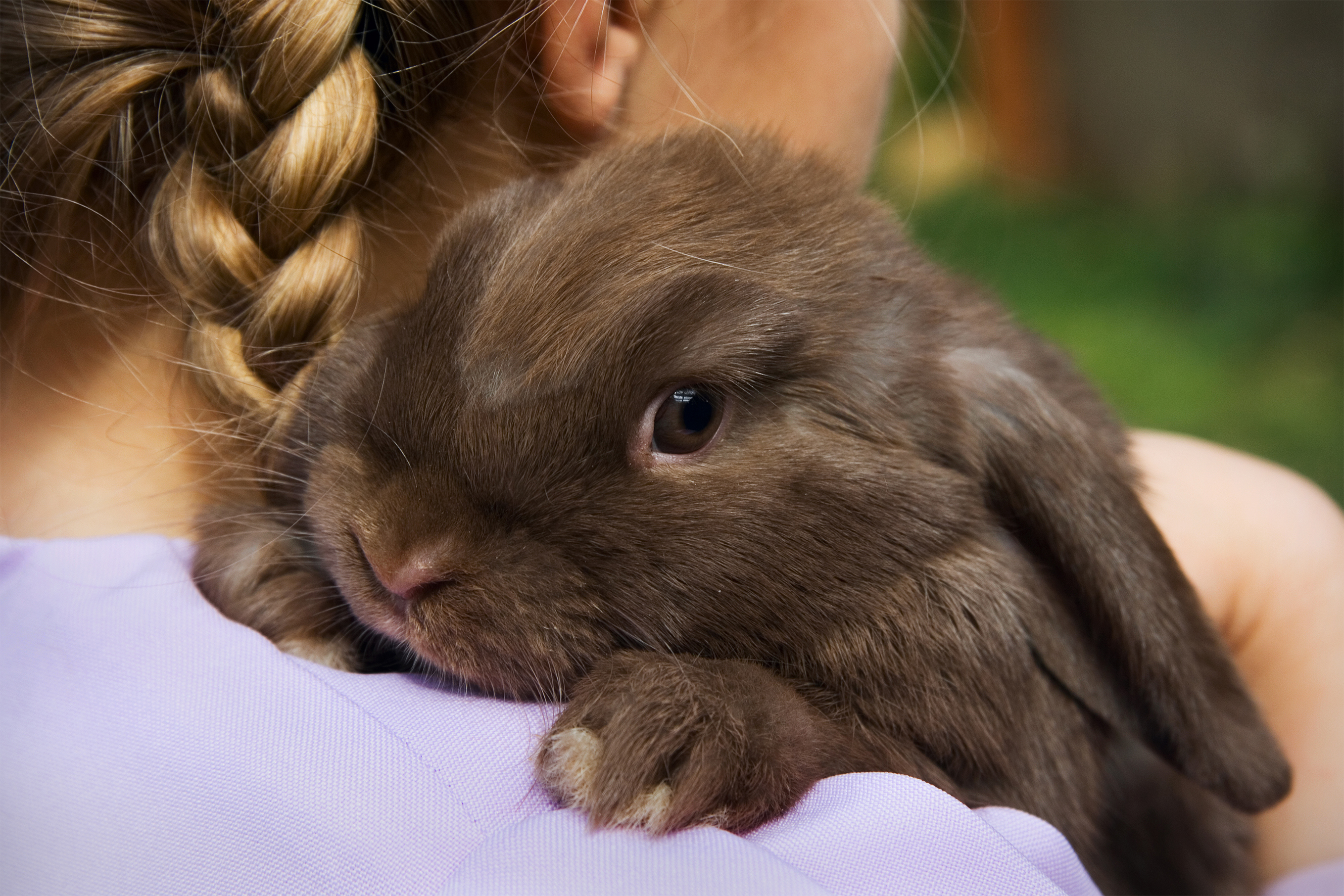 Exploring the world of people who keep rabbits as house pets | The ...