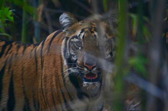 Tadoba Tiger Reserve (Nagpur) Tour