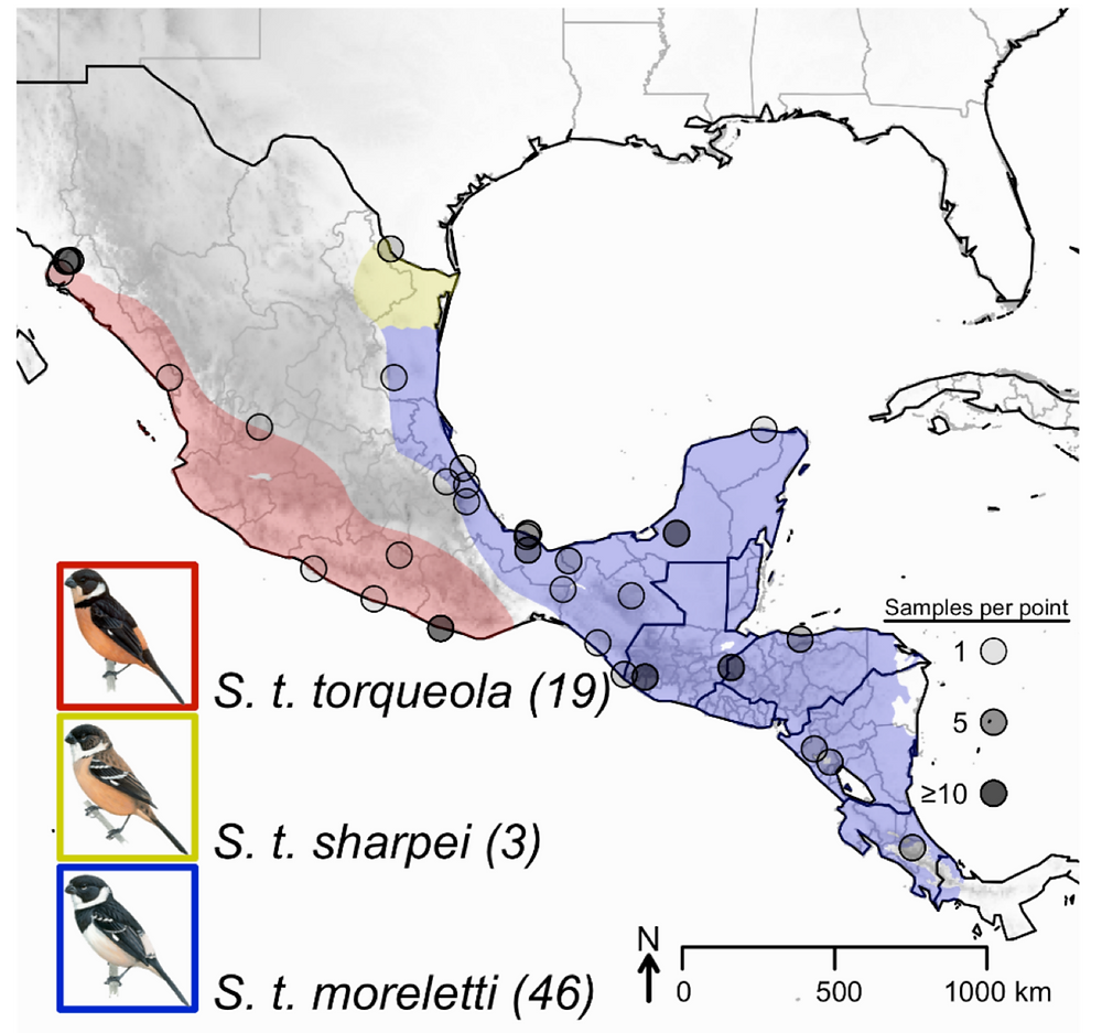 The three new species and their range taken from the original SACC proposal