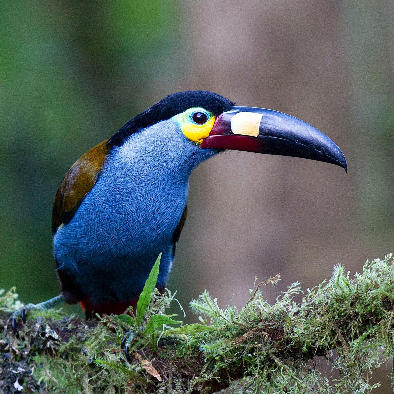 Ecuador's Magical Cloudforest
