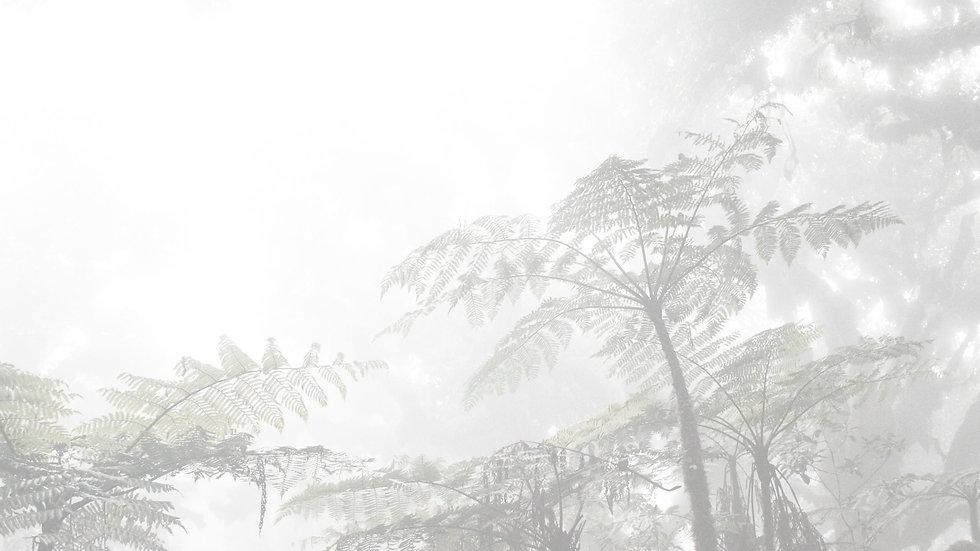 Cocos Fern.jpg