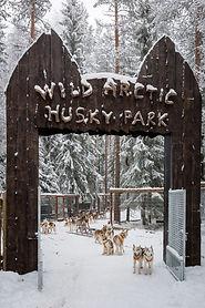 Wild Arctic Husky Park sijaitsee Ranuan eläinpuiston läheisyydessä. Rekikoira-ajelut lähtevät talvisin Husky Parkista.
