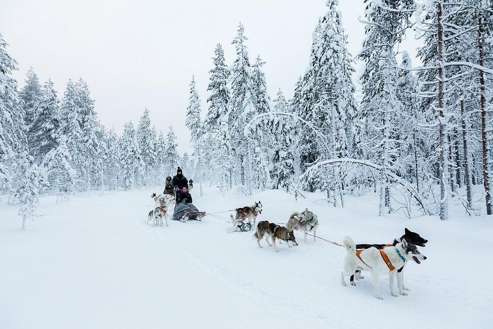 Huskysafari talvella lumisessa luonnossa. Puolessa matkassa on tauko jolloin opas voi ottaa valokuvia..