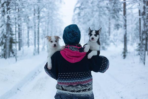 Huskyfarmilla voi tavata huskynpennut. Naisella kaksi pentua sylissa ja taustalla kaunis luminen luonto.