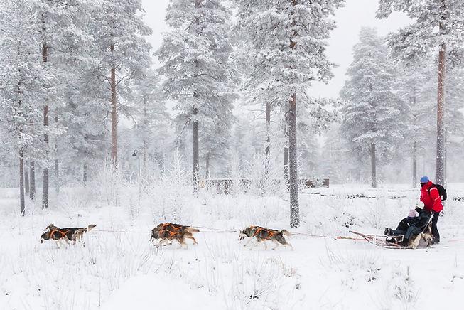 Koiravaljakkoajelut sopivat kaikenikäsille. Huskyt vetävät rekeä, jossa toinen aikuista ohjaa ja toinen istuu kyydissä lapsi sylissä. Safarit voi myös maksaa henkilöstöeduilla.