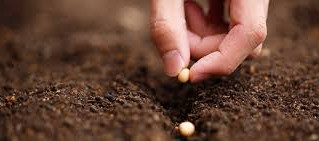 Planting Seeds and Patience