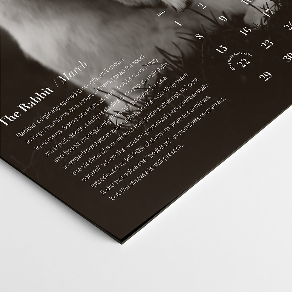 details2.jpg