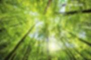 hrpi - trees & sunshine.jpg