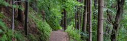 WoodTrailBanner.jpg