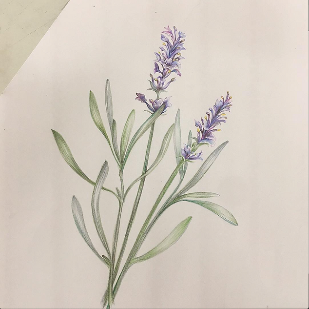 botanical drawing.png