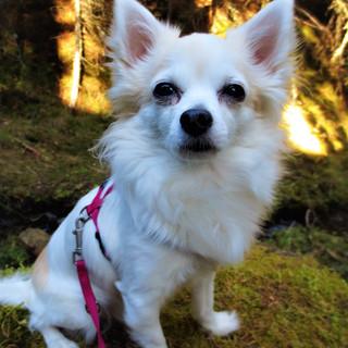 Landhaushund Bella