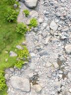 Where grass meets stone
