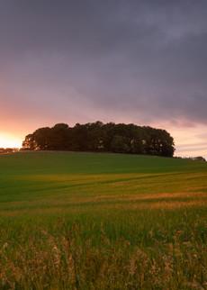 Fawsley Field