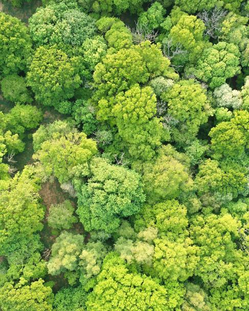 Everdon Stubbs Spring Green