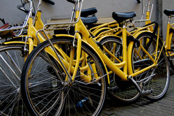 Yellow Bikes In Amsterdam
